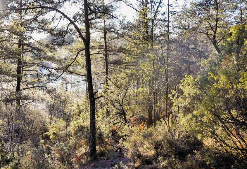 Forest clearing in sun